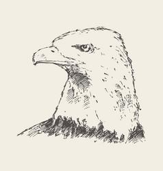 Eagle looking into distance drawn sketch vector