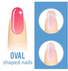 Nail shape oval vector