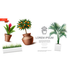 realistic houseplants template vector image