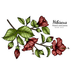 red hibiscus flower and leaf drawing with line vector image