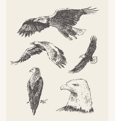 collection eagles hand drawn sketch vector image