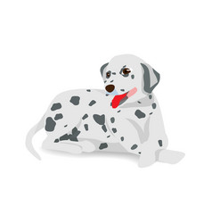 dalmatian sitting on floor with shadow vector image