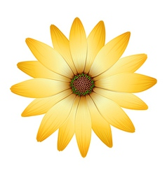 A flower with orange petals vector