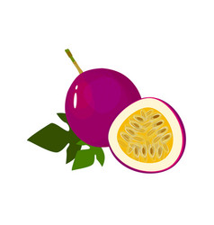 cartoon fresh passionfruit fruit isolated on white vector image