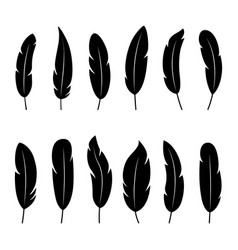 set black silhouettes feathers on white vector image
