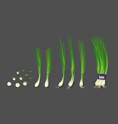 spring onions and spring onions shredded vector image