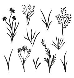Garden and wild plants vector image