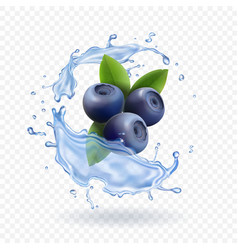 Blueberry and water splash isolated vector