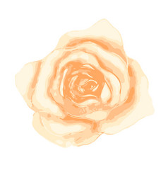 bright gentle beautiful tea rose bud isolated on vector image
