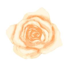 bright gentle beautiful tea rose bud isolated vector image