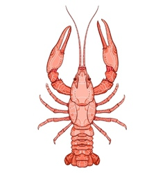 Decorative isolated crayfish vector image