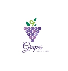 Grapes isolated logo icon vector image