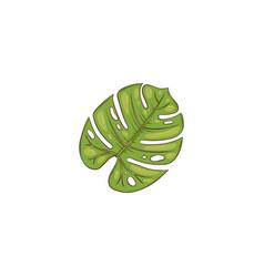 green hawaiian tropical banana leave vector image