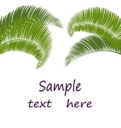Leaves of palm tree on white background vector image