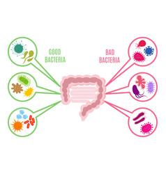 poster of intestinal flora gut health vector image