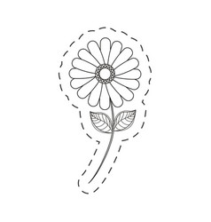 flower daisy floral decoration cut line vector image vector image