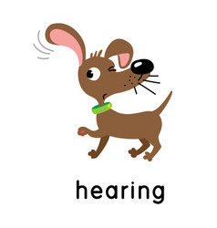 A dog is hearing one five senses hearing vector