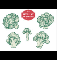 Collection of hand drawn pastel brocolli vector