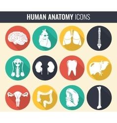 Human internal organs anatomy set vector