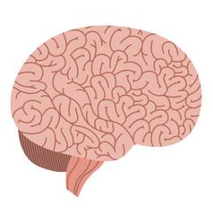 isolated brain organ design vector image