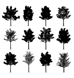 maple trees vector image