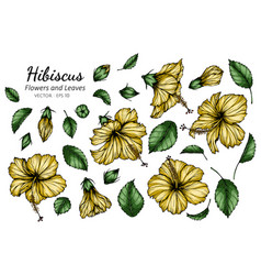 Set yellow hibiscus flower and leaf drawing vector