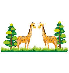 Two giraffes standing in park vector
