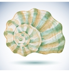 Watercolor sea shell vector image