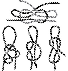 sea knot 1 vector image vector image