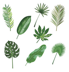 set of leaves of tropical plants collection of vector image
