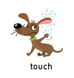Dog and raindrops five senses touch vector
