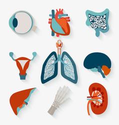 medical icons internal human organs vector image