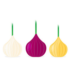 onion flat design icon vector image