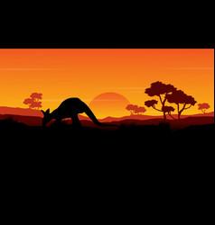 beauty silhouette of kangaroo landscape vector image vector image