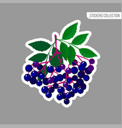 cartoon fresh elderberries isolated sticker vector image