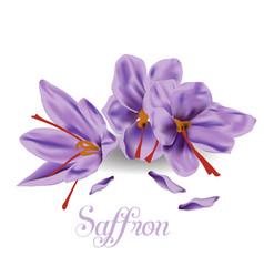 Saffron-icon-on-a-white-background vector