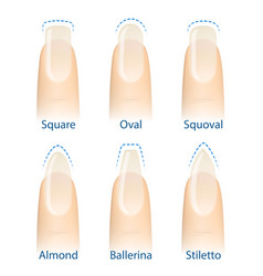 set of nails shapes vector image