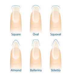 Set of nails shapes vector