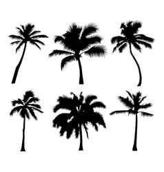 palm tropical set of black silhouette coconut vector image
