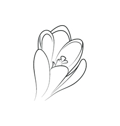 Crocus flower simple black lined icon vector