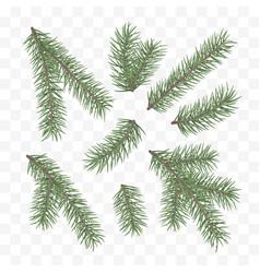 green fir branches holiday decor element set a vector image