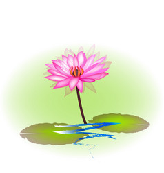 pink lotus plant icon vector image