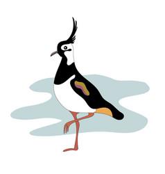 lapwing bird vanellinae cartoon image vector image vector image