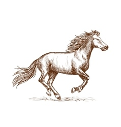 White horse running gallop sketch portrait vector image vector image