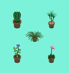 Isometric flower set of houseplant peyote plant vector