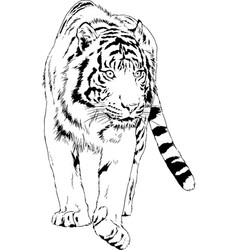 Tiger drawn with ink from hands vector