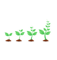 Phases plant growing planting tree infographic vector