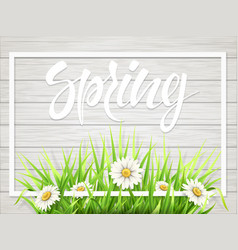 spring lettering with grass and chamomile vector image