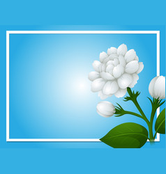 border template with white jasmine flowers vector image vector image