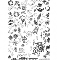 flowers and floral collection vector image